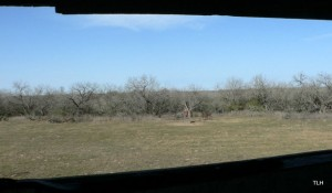 Photo: View from the hunting stand