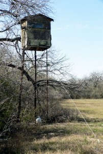 Photo of hunting stand for hog hunting
