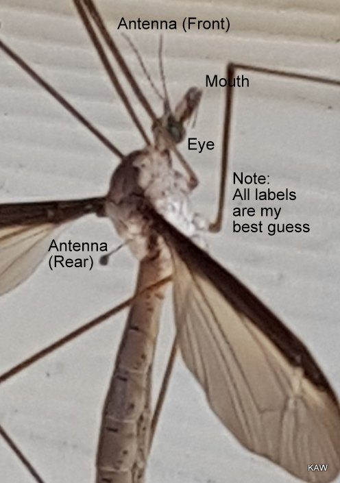 Photo (enlarged) of insect, natural beauty.