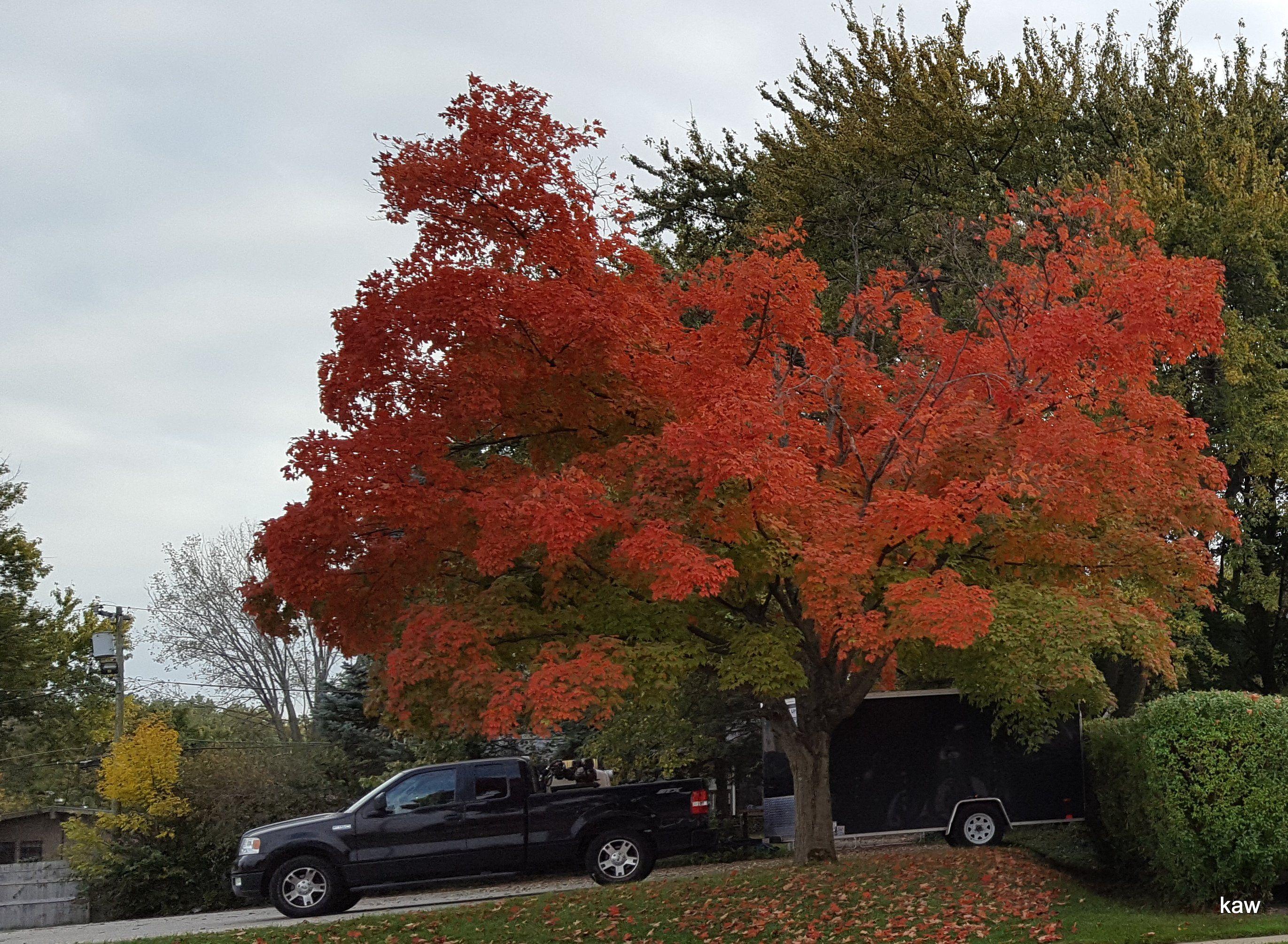 Photo of neighborhood color